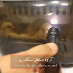 Easy bator 5 cheap egg incubator